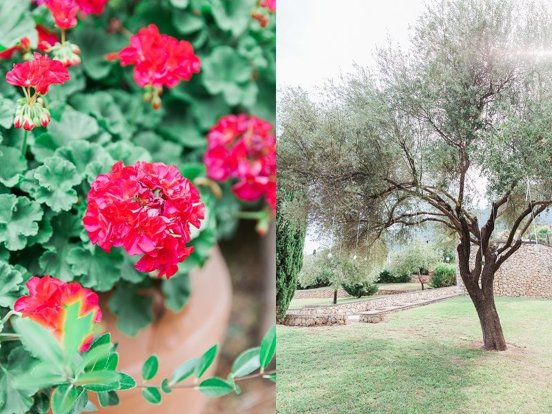 Mirrors Hanging from an Olive Tree and Red Flowers For the Bohemian Garden Wedding at Ionain Blue