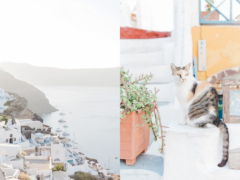 The Village of Oia Santorini and A Mottled Village Cat